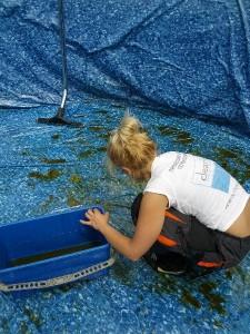 почистване на басейни